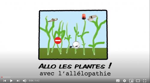 Allo les plantes avec l'allélopathie
