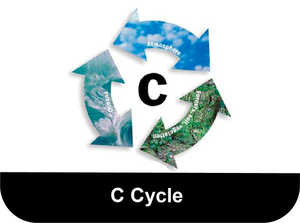 C-Cycle-button