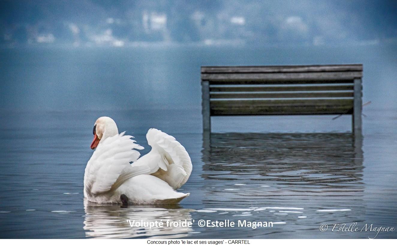 'Volupté froide'-Dans leur douceur blanche les habitants du lac profitent de l'extension de la nature © Estelle Magnan