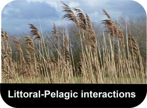 Littoral-Pelagic-interactions-button