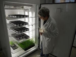 Expérimentation en germinateur.