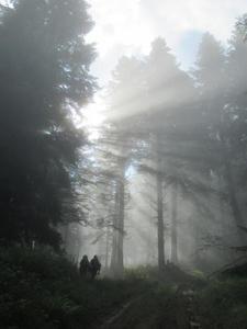 Matin en forêt ©Sophie Labonne