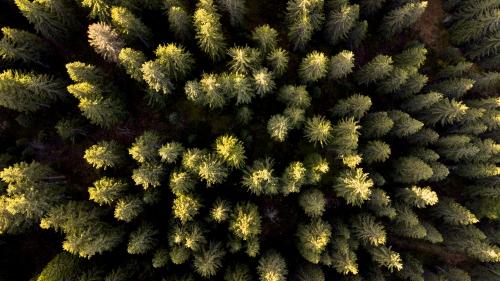 Forêt & Socio-Ecosystèmes